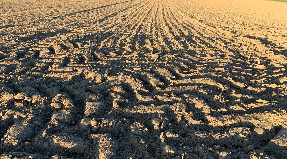 In der Kindheit sind die Furchen gezogen und die Saat ist ausgebracht.